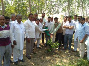 Tree Plantation at The Radaur PACS on Dated 28.03.2019